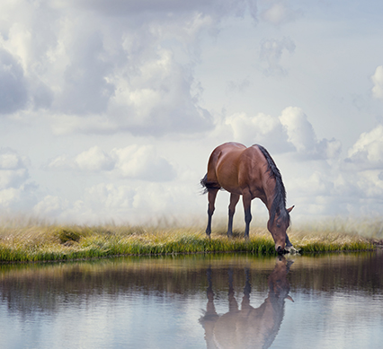 It turns out you can take a horse to water and get it to drink…